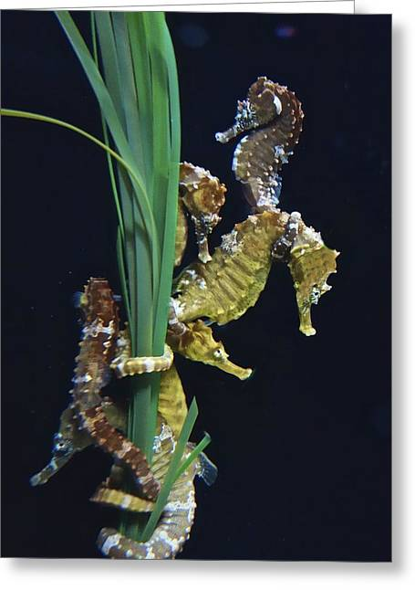 Greeting Card featuring the photograph Sea Horse by Joan Reese
