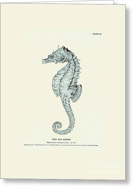 Sea Horse  Greeting Card by Patruschka Hetterschij
