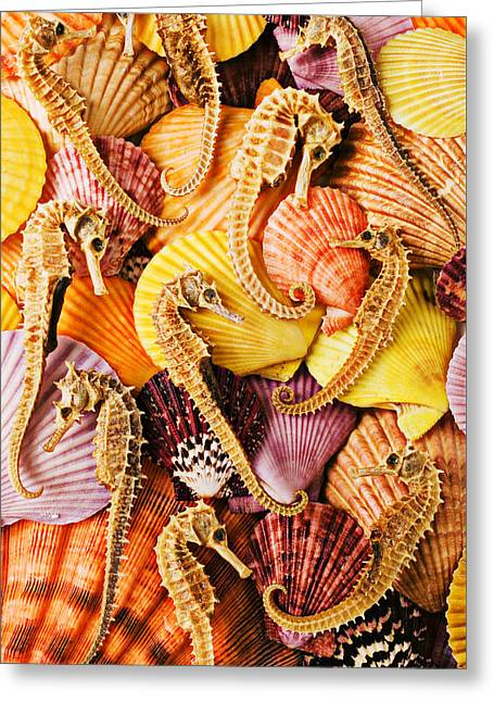 Sea Horses And Sea Shells Greeting Card by Garry Gay