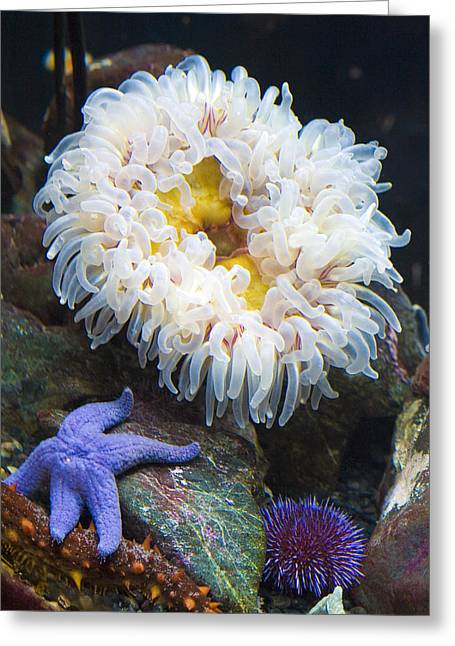 Sea Life Greeting Card by Marilyn Hunt