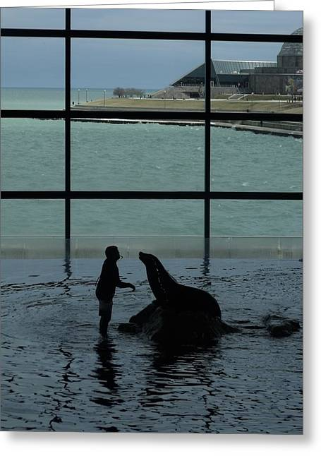 Sea Lion II Greeting Card