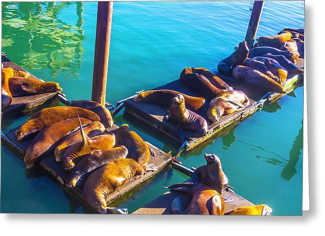 Sea Lions On Harbor Docks Greeting Card