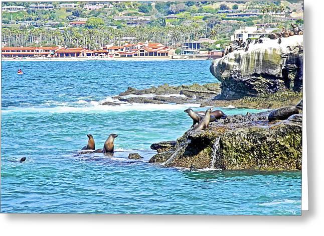 Sea Lions On Rocks At La Jolla-california Greeting Card