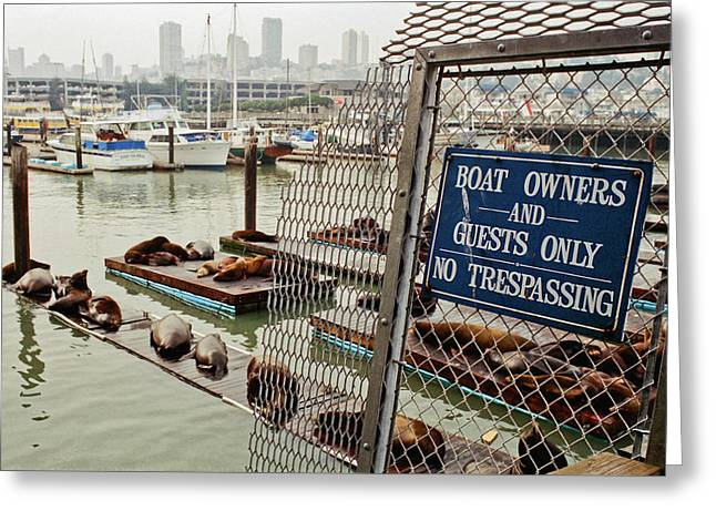 Sea Lions Take Over, San Francisco Greeting Card