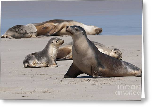 Greeting Card featuring the photograph Sea Lions by Werner Padarin