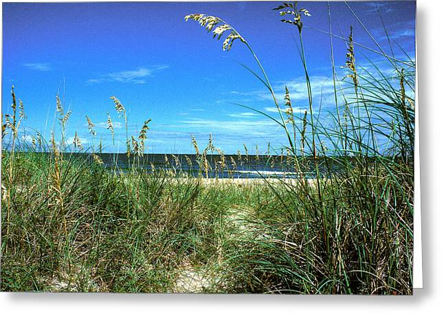 Sea Oat Dunes 11d Greeting Card
