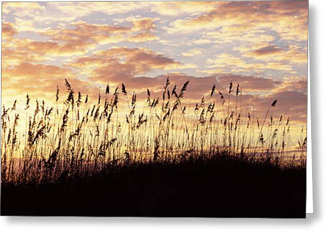 Sea Oat Grass On The Beach, Atlantic Greeting Card by Panoramic Images