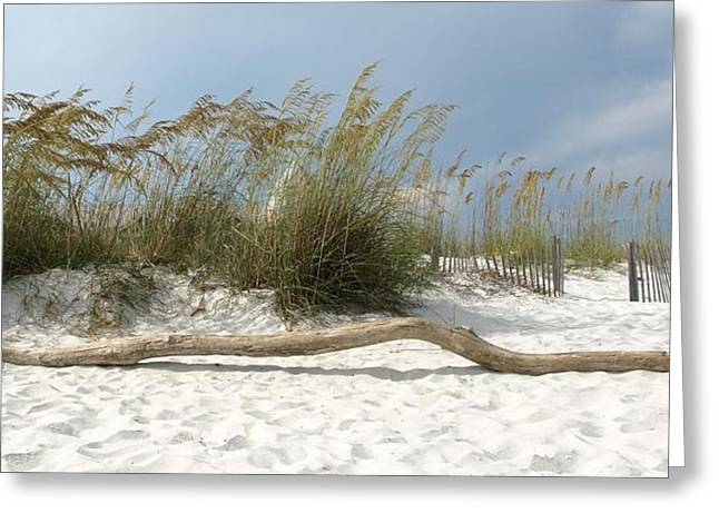 Sea Oats And Driftwood Greeting Card by Dennis Stein