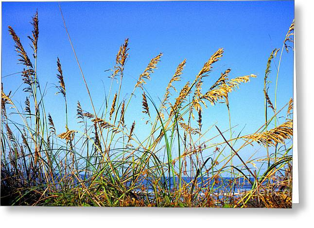 Sea Oats And Sea Greeting Card by Thomas R Fletcher