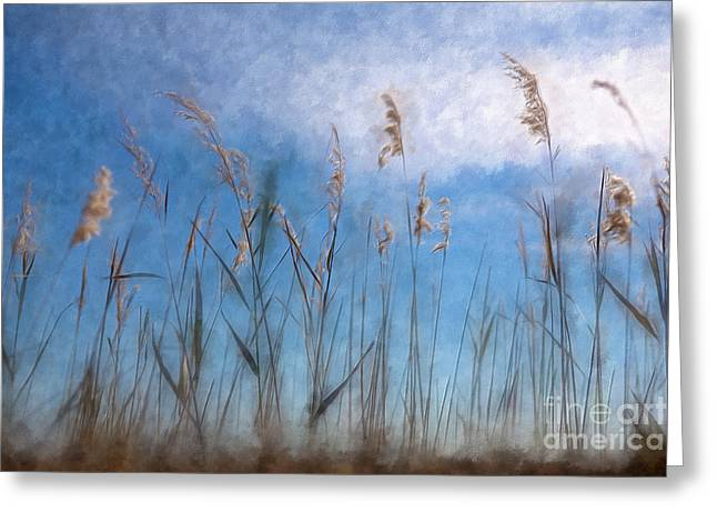 Sea Oats And Sky On Outer Banks Ap Greeting Card by Dan Carmichael