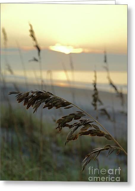 Sea Oats At Sunrise Greeting Card
