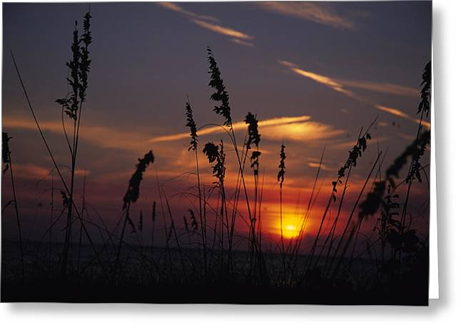 Sea Oats Blow In The Breeze As The Sun Greeting Card by Stacy Gold