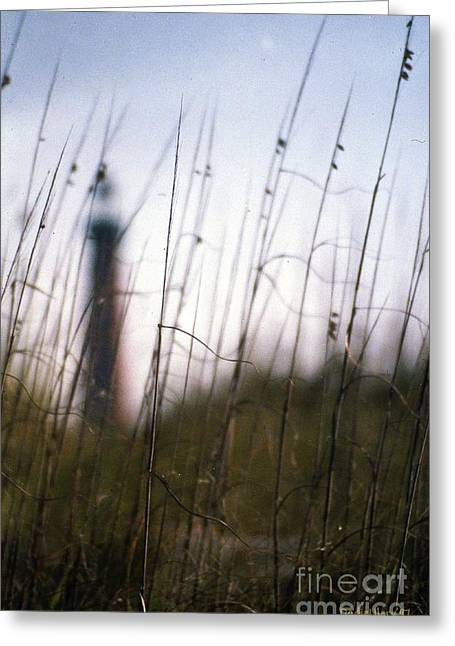 Sea Oats Dunes  Greeting Card