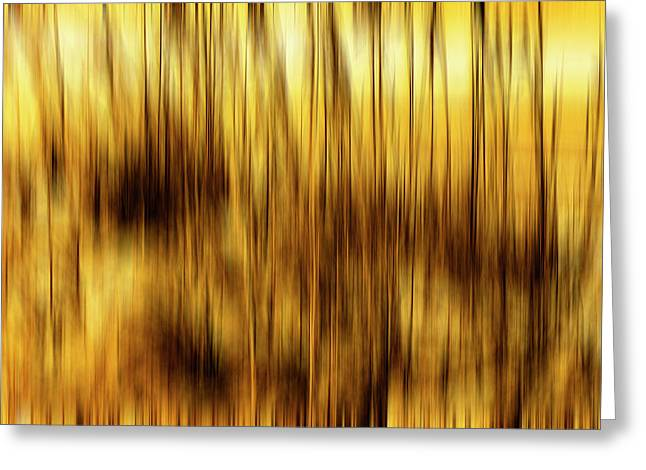 Sea Oats In Motion Greeting Card by Skip Nall
