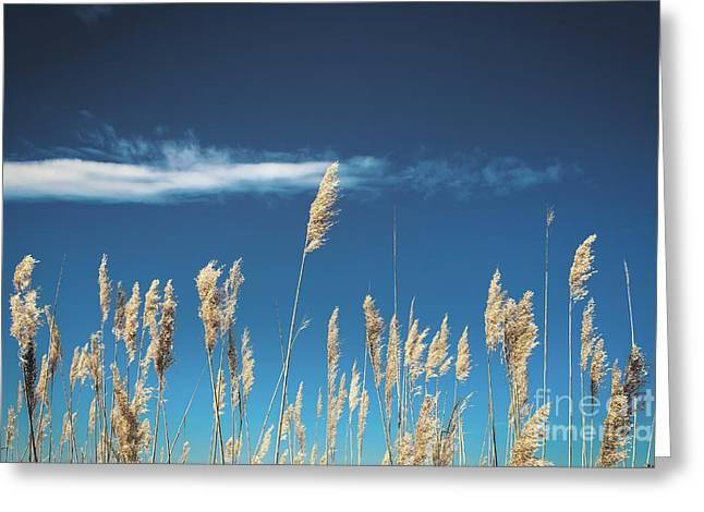 Greeting Card featuring the photograph Sea Oats On A Blue Day by Colleen Kammerer