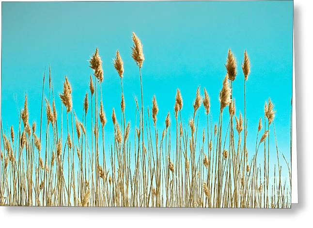 Sea Oats On Turquoise Sky Greeting Card by Colleen Kammerer