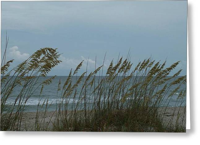 Sea Oats On Wrightsville Beach Greeting Card