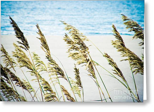 Sea Oats Greeting Card by Tonya Laker