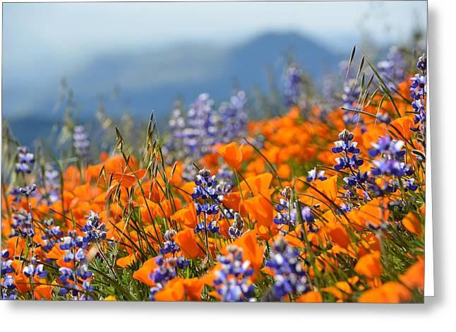 Sea Of California Wildflowers Greeting Card