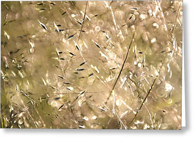 Sea Of Grass Greeting Card