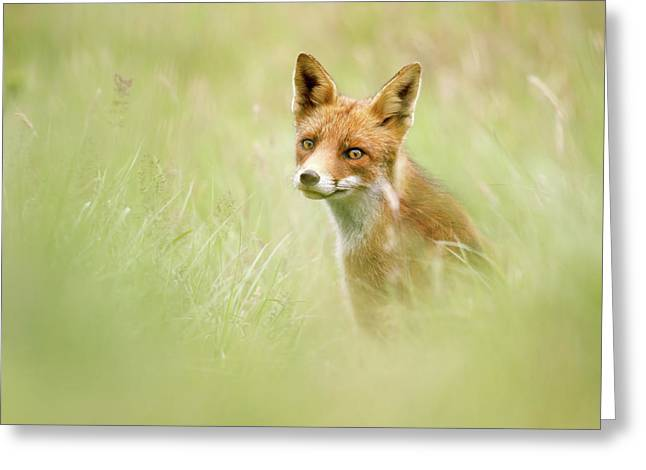 Sea Of Green - Red Fox In The Grass Greeting Card by Roeselien Raimond