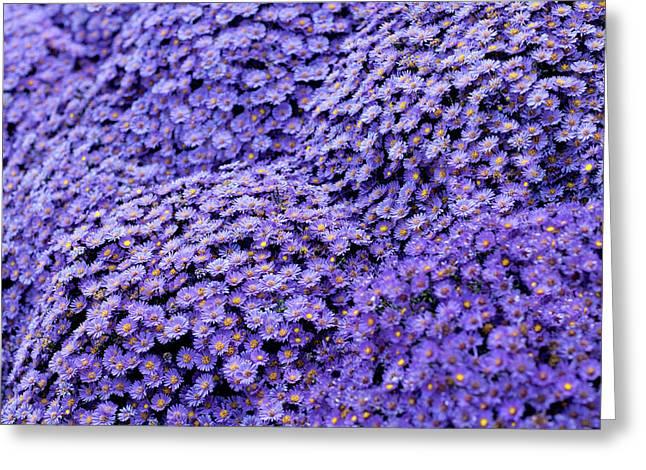 Sea Of Lavender Flowers Greeting Card by Todd Klassy