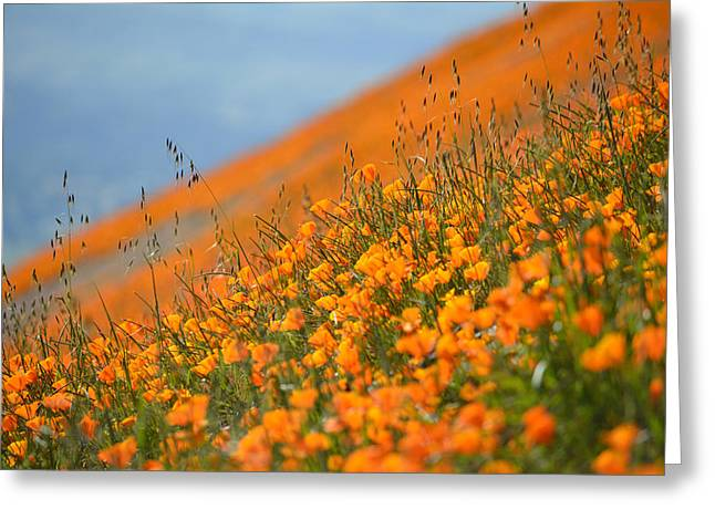 Sea Of Poppies Greeting Card