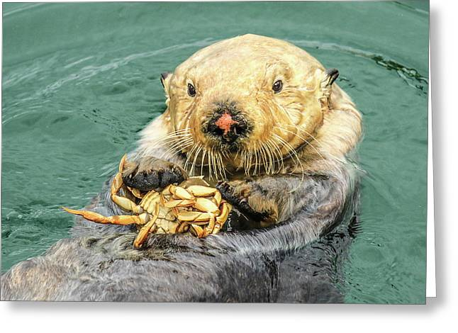 Sea Otter Having Lunch Greeting Card