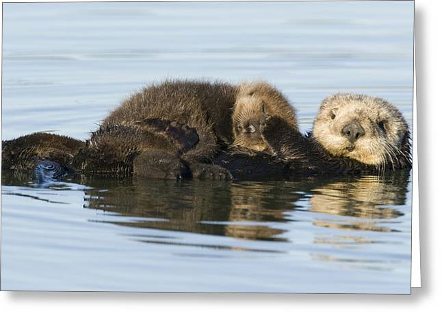 Sea Otter Mother And Pup Elkhorn Slough Greeting Card by Sebastian Kennerknecht