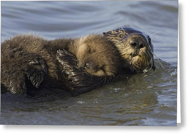 Behaviour Greeting Cards - Sea Otter Mother With Pup Monterey Bay Greeting Card by Suzi Eszterhas