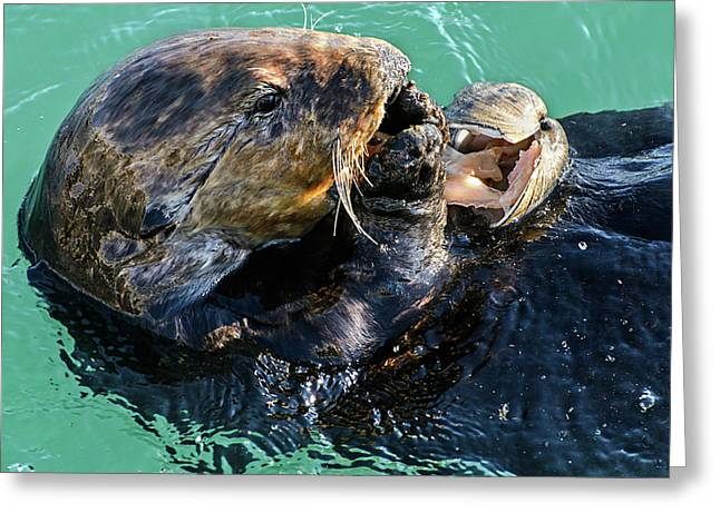 Sea Otter Munching On A Clam Greeting Card