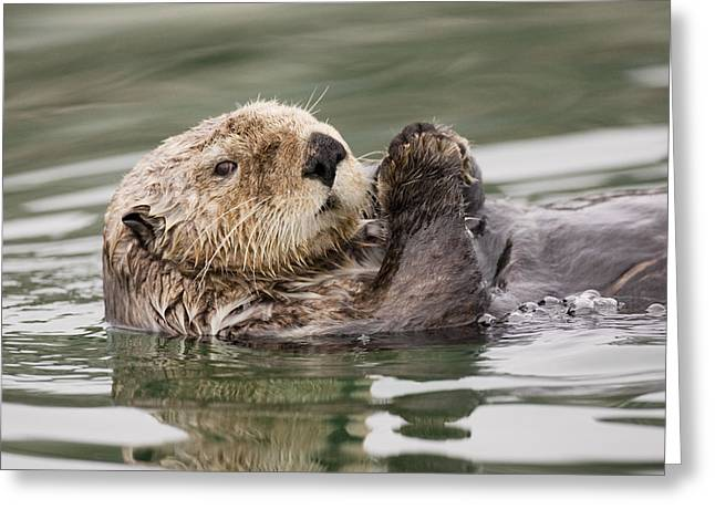 Sea Otter Profile Greeting Card by Tim Grams