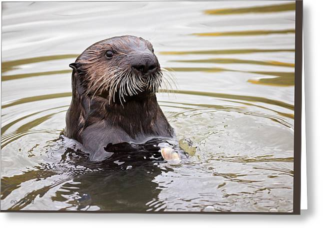 Sea Otter With Clam Greeting Card