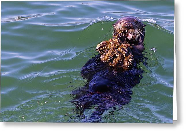 Sea Otter With Lunch Greeting Card by Randy Bayne