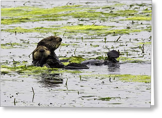 Sea Otters 1 Greeting Card