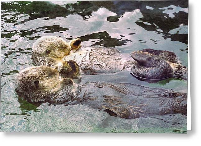 Sea Pyrography Greeting Cards - Sea Otters Holding Hands Greeting Card by BuffaloWorks Photography
