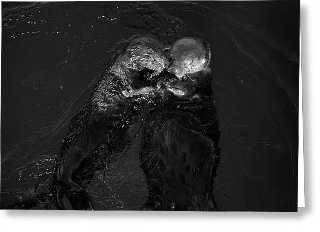 Sea Otters II Bw Greeting Card