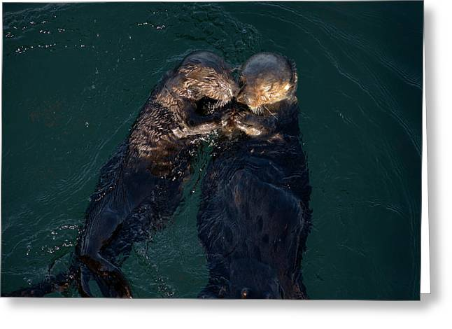 Sea Otters II Color Greeting Card