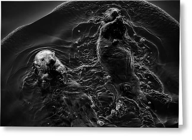 Sea Otters Iv Bw Greeting Card by David Gordon