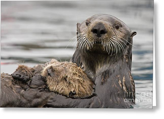 Sea Otters Greeting Card by Tim Grams