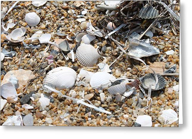 Sea Ribbons And Shells Greeting Card by Marcie Daniels