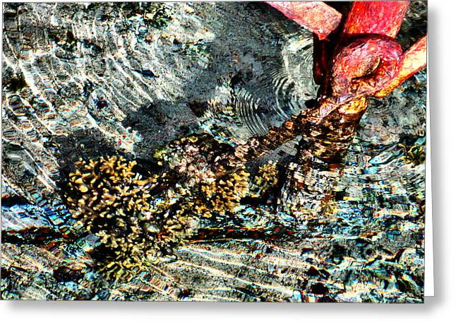 Sea. Rusty Iron And Corals. Greeting Card by Andy Za