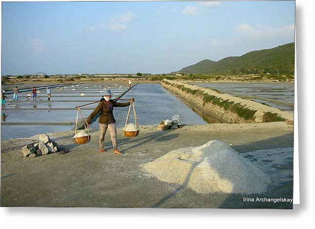 Sea Salt Harvesting In Vietnam  Greeting Card