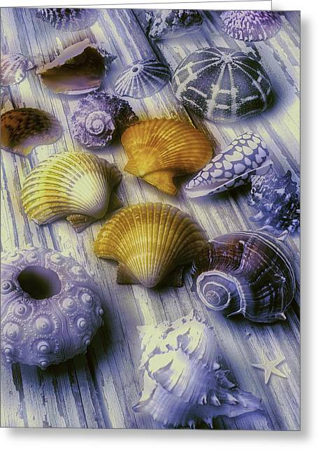 Sea Shell Arrangement  Greeting Card