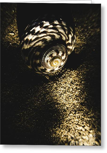 Sea Shell In Darkness Greeting Card by Jorgo Photography - Wall Art Gallery