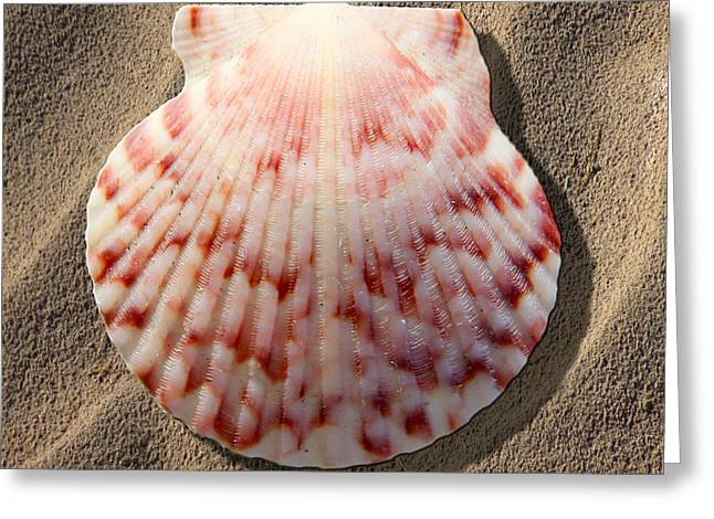 Sea Shell Greeting Card by Mike McGlothlen