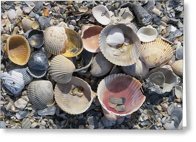 Sea Shell Mozaic Greeting Card