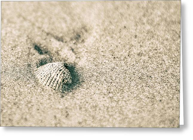 Greeting Card featuring the photograph Sea Shell On Beach  by John McGraw