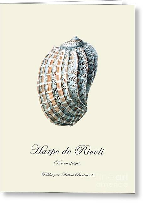 Sea Shell Greeting Card by Patruschka Hetterschij