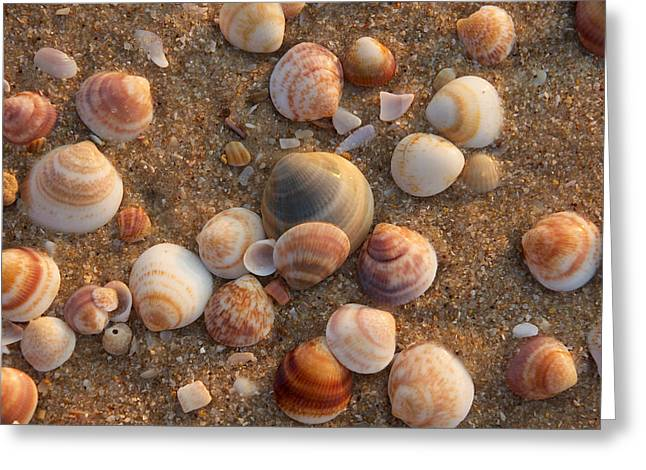 Sea Shells At Sunset Greeting Card